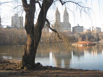 El reno building over pond w tree
