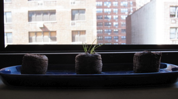 Plants by window